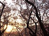 さくら 名所名木を訪ねて 高遠城址公園(長野)