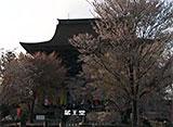 さくら 名所名木を訪ねて 吉野山(奈良)