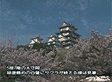 さくら 名所名木を訪ねて 姫路城(兵庫)
