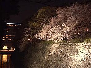 さくら 名所名木を訪ねて 名古屋城(愛知)