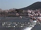 さくら 名所名木を訪ねて 京都の桜(京都)