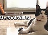 はっちゃん the movie 2 はっちゃんと遊ぼう