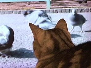 猫のためのテレビ オープニング