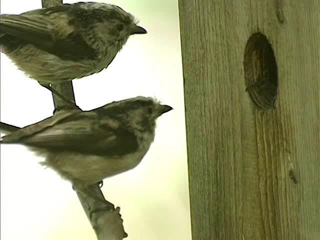 野鳥歳時記・春夏秋冬 野鳥キーワード編/ヘルパー