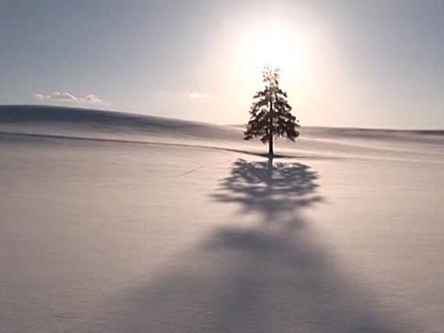 美瑛・富良野の四季 冬の丘