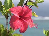 沖縄・美ら島百景/八重山7島を訪ねて 石垣島-1