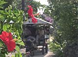 沖縄・美ら島百景/八重山7島を訪ねて 竹富島