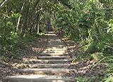 沖縄・美ら島百景/八重山7島を訪ねて 小浜島