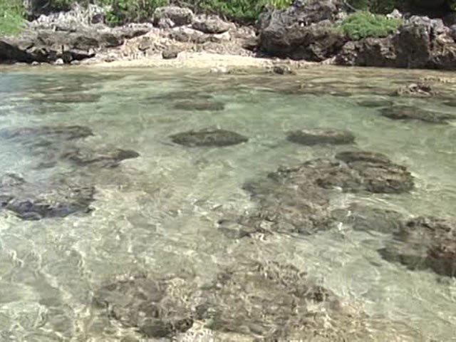 沖縄・美ら島百景/八重山7島を訪ねて 西表島-1