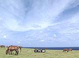 沖縄・美ら島百景/八重山7島を訪ねて 与那国島