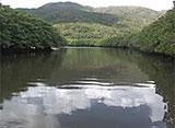 沖縄・美ら島百景/八重山7島を訪ねて 西表島/仲間川遊覧船