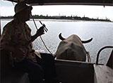 沖縄・美ら島百景/八重山7島を訪ねて 由布島/水牛車観光