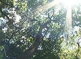 沖縄・美ら島百景/本島・宮古島を訪ねて 【本島】斎場御嶽