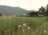 韓国百景・世界遺産 江華の支石墓群