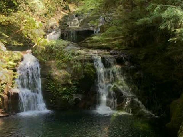 森林浴「新緑の森」スペシャル オープニング