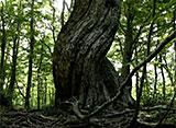 森林浴「新緑の森」スペシャル 温身平