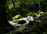 森林浴「新緑の森」スペシャル 尚仁沢湧水