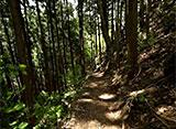 森林浴「新緑の森」スペシャル 奥多摩むかし道