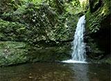 森林浴「新緑の森」スペシャル 御岳山