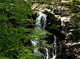 森林浴「新緑の森」スペシャル 檜原都民の森 大滝の路