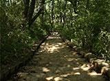 森林浴「新緑の森」スペシャル 高尾山