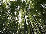 森林浴「新緑の森」スペシャル 竹林公園