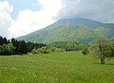 森林浴「新緑の森」スペシャル 信州・信濃町 癒しの森