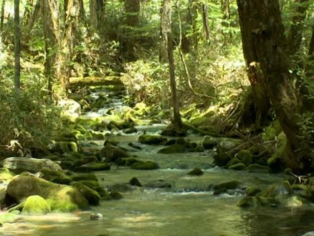 森林浴「新緑の森」スペシャル 上高地