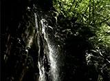 森林浴「新緑の森」スペシャル 付知峡