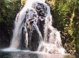 森林浴「新緑の森」スペシャル 赤目四十八滝