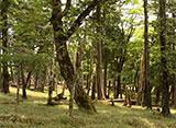 森林浴「新緑の森」スペシャル 大台ヶ原