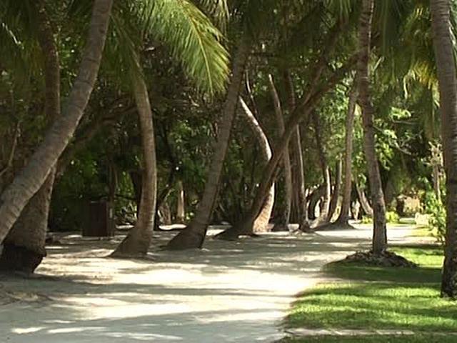 スローブルー ボッサ・モルディブ Organic Island