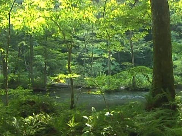 森林浴  奥入瀬(青森)