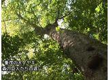 森林浴  十二神自然観察教育林(岩手)