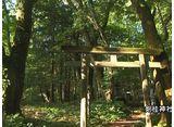 森林浴  阿武隈川源流の原生林(福島)