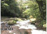 森林浴  菊池渓谷(熊本)