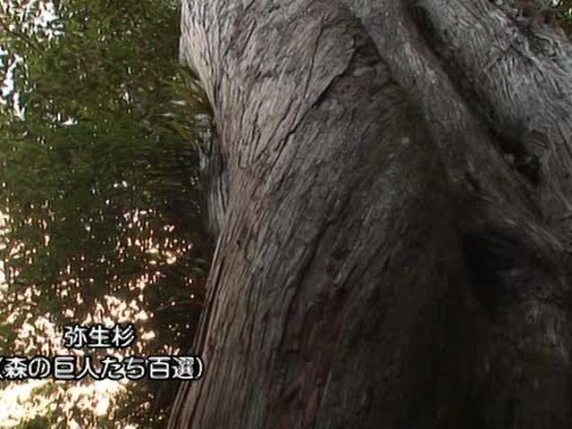 森林浴  屋久島(鹿児島)