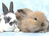 ウサギとリス ウサギ
