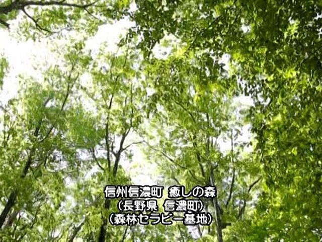 日本 癒しの百景 森 Forest