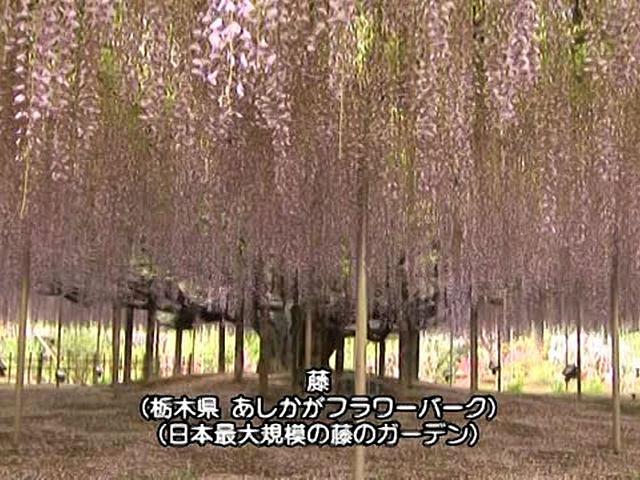 日本 癒しの百景 花 Flower