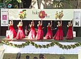 Hawaiiフラ紀行 シーズン2 #5