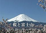 富士山百景 桜と富士山