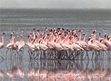 世界の絶景 サバンナの大平原と動物たち/ケニア・タンザニア