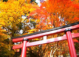 紅葉もみじ 〜古都奈良〜