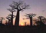 絶景!世界の夕景 マダガスカル