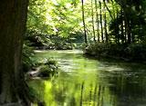 緑水 〜清流〜