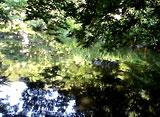 緑水 〜紋水〜