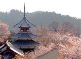 さくら 三大名所を訪ねて〜吉野山〜