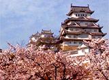 さくら 三名城を訪ねて〜姫路城〜