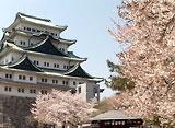 さくら 三名城を訪ねて〜名古屋城〜
